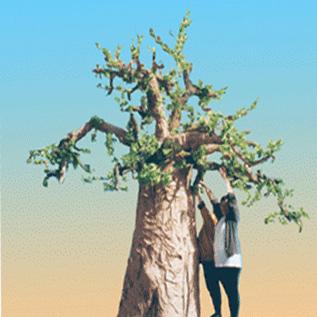 Une sculpture décor baobab figurative, monumentale